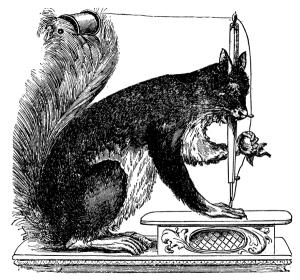 squirrel-machine-s-b-ellithorp-1c2a3857
