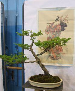bonsaï1